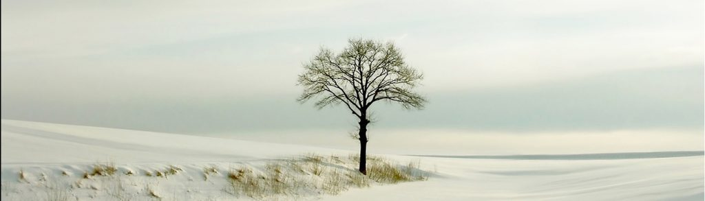 Picturesque winter scenery with white tree in the field